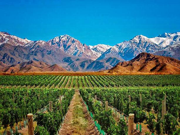 Виноделие Аргентины